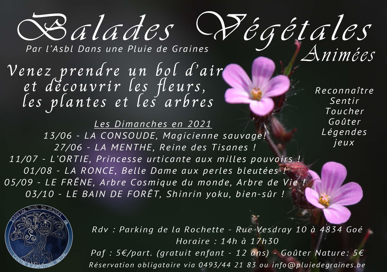 """Balades Végétales """"L'Ortie – Princesse urticante aux milles pouvoirs !"""""""