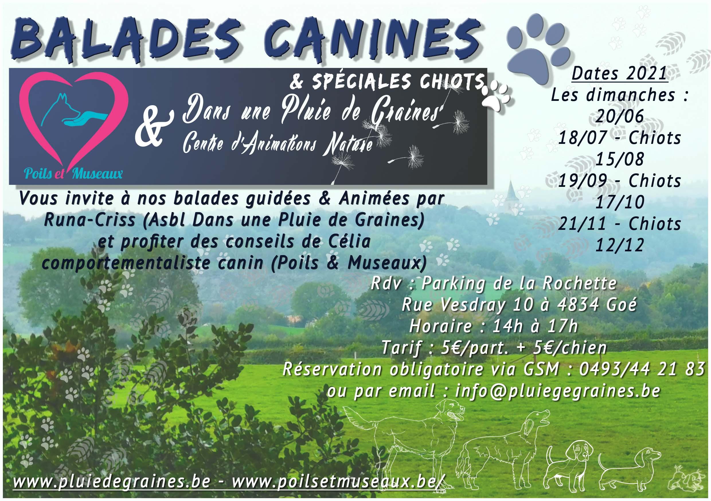 """Balade Canine """"Spéciale Chiots"""" en Pleine Nature"""